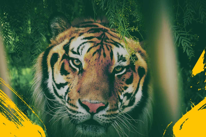 Reino Animal, divertido parque temático, Teotihuacán ...